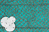 picture of sand dollar  - Blank antique teal blue aged wooden sign and fish netting background with collage of sand dollars - JPG