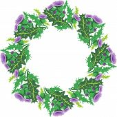 stock photo of scottish thistle  - vector image beautiful round wreath vignette of flowers thistle - JPG