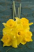 foto of jonquils  - Closeup of yellow jonquil flowers on green background - JPG