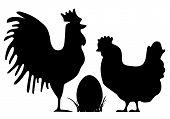 pic of black-cock  - Cock - JPG