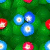 picture of ipomoea  - Seamless pattern with flowers ipomoea morning glory - JPG