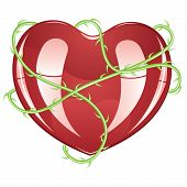 stock photo of envy  - Red glossy heart icon with green rose thorns on white background - JPG