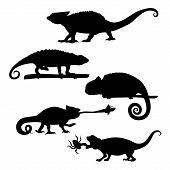 foto of chameleon  - Chameleon of silhouettes set vector - JPG