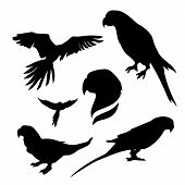pic of parrots  - Parrot set of silhouettes - JPG