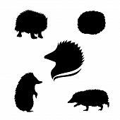 stock photo of animal silhouette  - Hedgehog set of black silhouettes - JPG