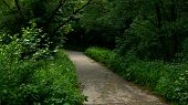 pic of crossroads  - Gravel road leading to the woods - JPG