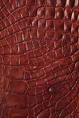foto of alligators  - Alligator patterned background - JPG