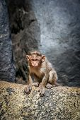 foto of macaque  - Wild macaque monkey on the rock in Hampi in India - JPG