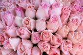 foto of bunch roses  - Fresh Pink rose bunch with drops of water - JPG