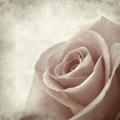 picture of pale  - textured old paper background with pale pink rose - JPG