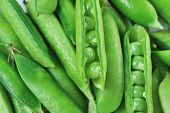 stock photo of pea  - Freshly picked sweet green peas - JPG