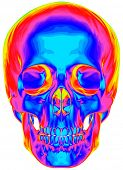 Thermal image of the human skull, isolated on white background. Bitmap copy my vector ID 74509654
