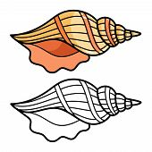 Cartoon Sea Shell Isolated On White Background. Colorful And Outline Shell For Kids Coloring Page, V poster
