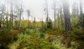 Forest Thicket, Windfall. Coniferous Forest, Taiga. Live Photo. poster