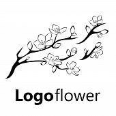 Blooming Cherry. Sakura Branch With Flower Buds. Black And White Drawing Of A Blossoming Tree In Spr poster