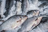Fresh Fish On Ice. Sale Of Fresh Frozen Fish On Farmers Bazaar. Open Showcases Of Seafood Market. Fi poster