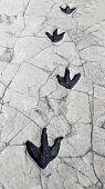 picture of paleontologist  - Detail of dinosaur tracks in Spain - JPG