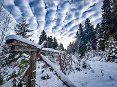 View Of Snowy Forest In Giant Mountains, Czech Republic. There Are Beautiful White Clouds In The Sky poster
