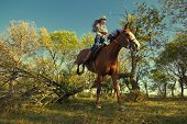 Image of Beautiful girl with purebred horse, jumping a hurdle in forest poster