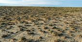 picture of semi-arid  - Panorama of dry barren terrain with scrubby vegetation in an arid semi - JPG