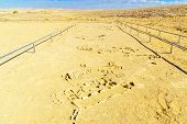 View Of Primitive Mosaics In The Leopard Temple Of Uvda, A 7000-year-old Temple In The Negev Desert, poster