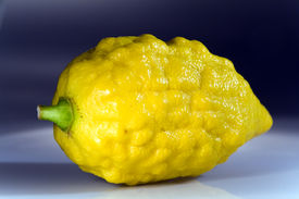 pic of sukkoth  - Etrog (Citrus medica) - a traditional citrus of Jewish holiday Sukkoth ** Note: Shallow depth of field - JPG