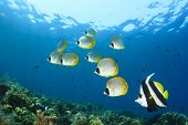 foto of biodiversity  - Tropical Fish on coral reef - JPG