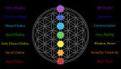 foto of plexus  - The seven main chakras and their meanings - JPG