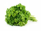stock photo of horticulture  - Green fresh parsley isolated on white background - JPG