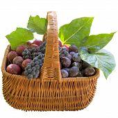 picture of crude  - Grapes Plum Fruit Crude Basket Ripe Sweet Product Fruit Food - JPG
