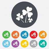 picture of red clover  - Clovers with three leaves sign icon - JPG