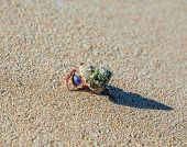 pic of hermit crab  - hermit crab on the beach on sand background - JPG
