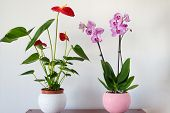 picture of pot  - Live potted plants in pots in the interior - JPG