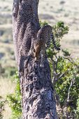 picture of veld  - Africa - JPG