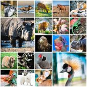 foto of deer family  - collage of beautiful colorful photos of different animals - JPG
