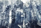 picture of surreal  - Abstract surreal forest background - JPG