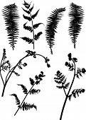 stock photo of fern  - illustration with set of fern silhouettes isolated on white - JPG