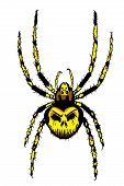 picture of creepy crawlies  - Spider illustration with skull on the back - JPG