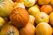picture of muskmelon  - muskmelon in the market - JPG