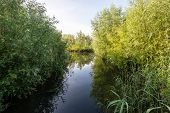 stock photo of early morning  - Reeds shrubs and trees at the banks of a small creek in a Dutch nature reserve early in the morning on a windless day in the summer season - JPG