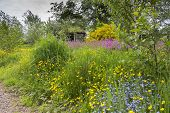 stock photo of wildflowers  - Wildflowers including buttercups forget me nots and pink campions in front of hut at Kildford Barns on the outskirts of Dumfries - JPG