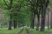 image of dirt road  - The photograph shows the forest - JPG