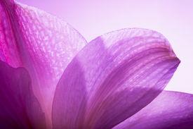 pic of violet flower  - Detail of flower - JPG