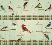 Beautiful Birds in The Cage Concept Design. Retro Style.