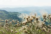 Mountain Flowers Landscape Flowers On The Wind. Mountain Flowers Landscape. Mountain Range Landscape poster