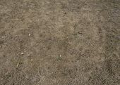 Withered Dry Grass Dryness, No Rain In Summer Climate Changes, Background poster
