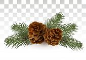 A Simple Rural Christmas Composition - Branches Of A Christmas Tree / Cedar And Cones. Isolated. Vec poster