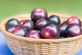 Muscadine Grapes Are Also Known As Swamp Grapes. They Are Sometimes Called Swan Grapes In Asian Food poster