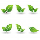 Set of green leaves. Element for design.