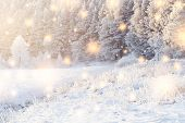 Shining Magic Snowflakes Fall On Snowy Forest In Sunlight. Christmas Background. Winter Nature Lands poster